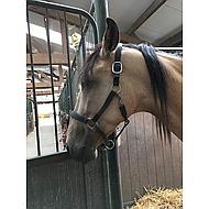 Harrys Horse Halster Leder, Padded Zwart Full