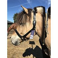 Harrys Horse Licol Padded Cuir Noir Full