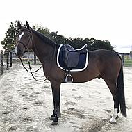Harrys Horse Zadeldek Next Navy/cream Full Dr