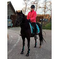 Harrys Horse Tapis de Selle de Dressage Next Marine/crème Full Dr