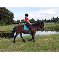 Harrys Horse Zadeldek Delux 15mm Rose Cob Dr