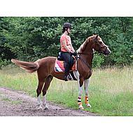 Harrys Horse Gamaschen Country Orange/Rot/Weiß/Blau XL