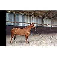 Harrys Horse Halstertouw Muskaton 4m Zwart