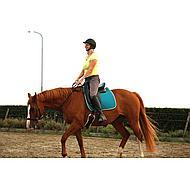 Harrys Horse Bitloos Hoofdstel Zwart Full