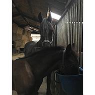 Harrys Horse Fohlen Halfter Schwarz