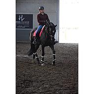 Harrys Horse Beenbeschermers Flextrainer Zwart S