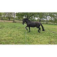 Harrys Horse Longe de Travail Soft L