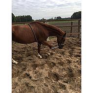 Harrys Horse Hilfslonge Soft L