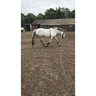 Harrys Horse Longeerhulp Soft M