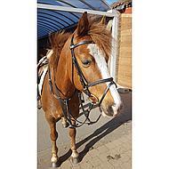 Imperial Riding Hoofdstel Fashion Light Blue Pony