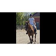 Harrys Horse Breeches Beijing II Navy/Fuchsia 36