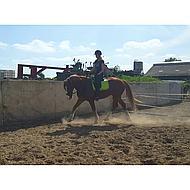 Harrys Horse Dames Rijbroek Beijing II Kobalt/grijs 40