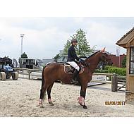 Harrys Horse Rijjas Softshell St.tropez II Navy/wit M