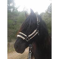 Harrys Horse Headcollarset Soft Black Full