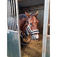 Harrys Horse Halfter set Soft Schwarz Full