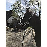Harrys Horse Halster Soft Zwart Cob
