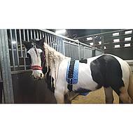 Harrys Horse Longeer Dek Turquoise
