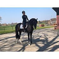 Harrys Horse Bustrens Anatomisch Dubbelgebroken 11.5