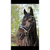Harrys Horse Hulstrens Concept 14.5