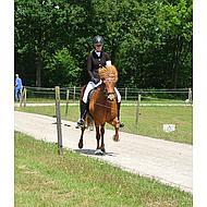 Harrys Horse Stocktie Ribbon Navy