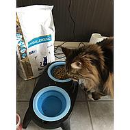 Royal Canin Hypoallergenic Kat 4,5kg