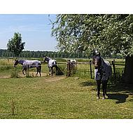 Harrys Horse Flysheet Surcingles Zebra 165/215