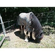 Harrys Horse Vliegendeken Zebra Plume Singels 155/205