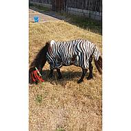 HH Fliegendecke Mesh Stdmassig Gurten Zebra Plume 165/215
