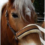 Lauria Garrelli Halster Champagne Donkergroen Pony