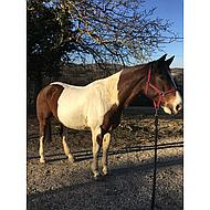 HKM Halster Stars Economy Rood Pony