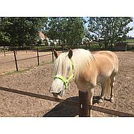 HKM Halster Stars Softice Zacht Geel Pony