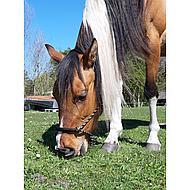 HKM Western Knoophalster Gevoerd Neus Oren Zwart/Beige Pony