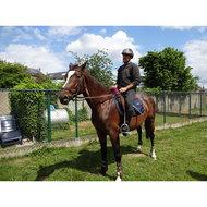 HKM Peesbeschermers en Strijklappen Set D-Bruin/Zwart Pony