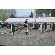 BR Peesbeschermers Event Dutch Black Pony