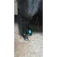 BR Strijklappen Event Pu Neopreen Voering Flash Black Pony