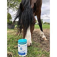 Phytonics Gluco Balance Pferd/Pony 500g
