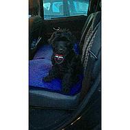 Clix Car-safe Veiligheidsgordel Auto Hond M