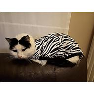 Medical Pet Shirt Kat Zebra XXS