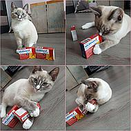 Milbemax Tasty Deworming Tablet Cat 2-12kg 4 Tab 4 Tab