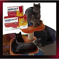 Milbemax Tasty Deworming Tablet Cat 2-12kg 4 Tab 4 Tab