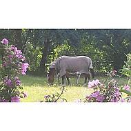 Rambo by Horseware Protector Oatmeal 100/150