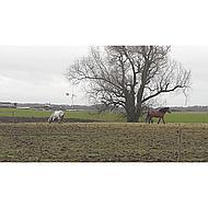 Horseware Fly Rug Liner 205