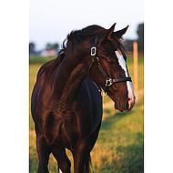 Amigo by Horseware Leather Headcollar Brown Full