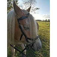 Rambo Micklem Multi Bridle Black Pony