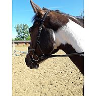 Rambo by Horseware Micklem Original Competition Black Cob