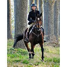 Harrys Horse Elastisch Voortuig Bruin