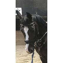 Harrys Horse Bustrens Dubbel Gebroken RVS