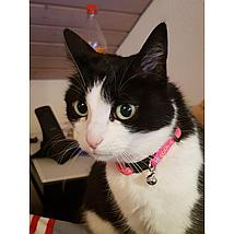 Kerbl Halsband Kat Collar Coolcats Roze