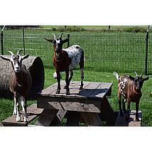 Esschert Thermometer boerderijdieren ass. 6,7x1,4x29,7cm