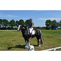Harrys Horse Sporen Zwanenhals Wiel Rvs